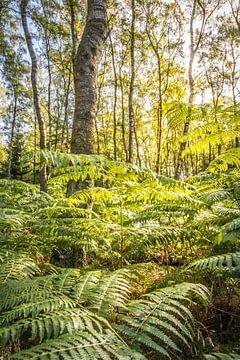 Forêt de bouleaux avec ferme dans le Taunus sur Christian Müringer