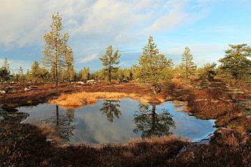 Autumn reflection van Jasmijn Peele