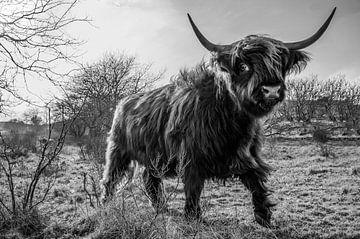Schotse Hooglander zwart/wit von Frank Slaghuis
