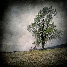 Tree and House van Ruud van den Berg