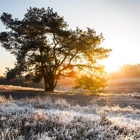 De heide tijdens de winter in Limburg van Yvette Baur