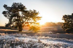 Brunsummerheide tijdens de winter van