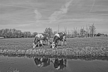 Hollandische kühe schwarz-weiss von Rico Heuvel