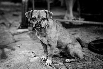 Portrait d'un chien sur Ellis Peeters
