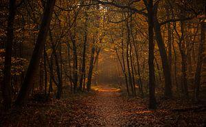 De gouden ingang tot het woud