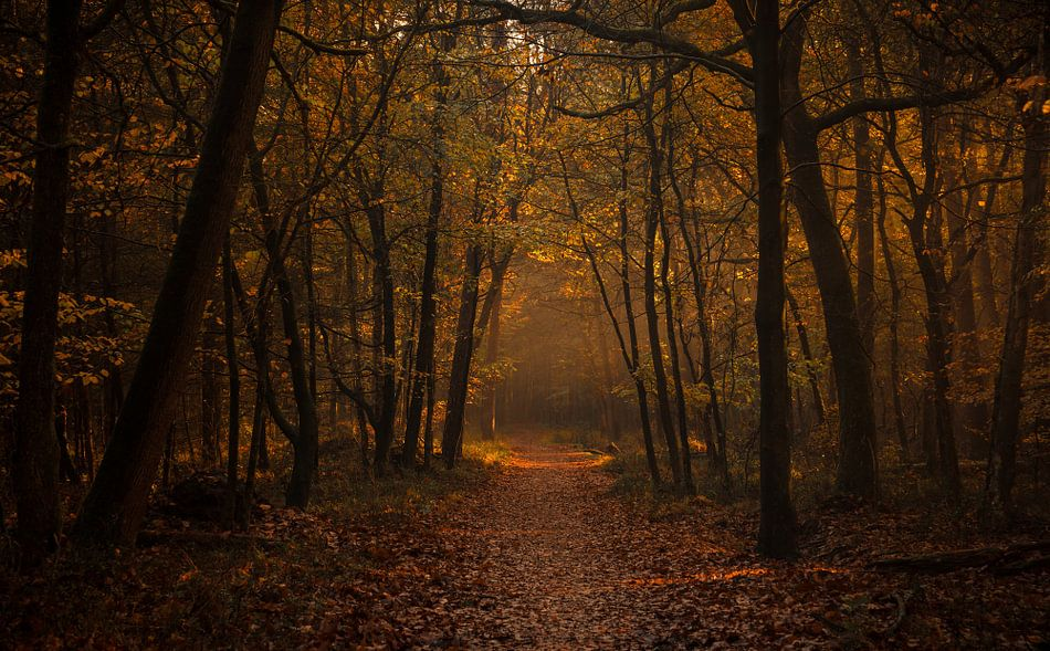 De gouden ingang tot het woud van Joris Pannemans - Loris Photography