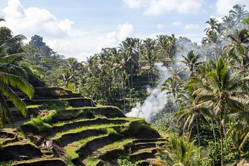 Reisfelder von Bali von Fulltime Travels