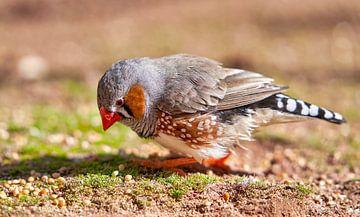 Tiere von Einhorn Fotografie