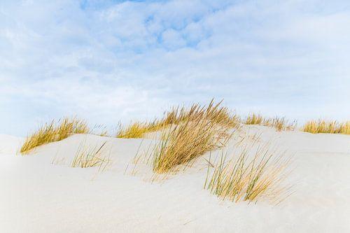 Duinen op het Waddeneiland Schiermonnikoog tijdens een mooie winterdag