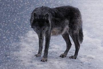 Die schwarze Wölfin von Joachim G. Pinkawa