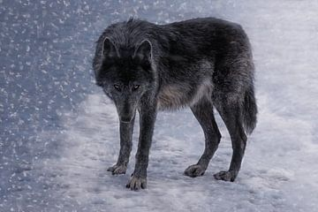 Die schwarze Wölfin van Joachim G. Pinkawa