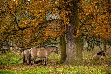 Herfstkleuren in Natuurgebied Ingendael van