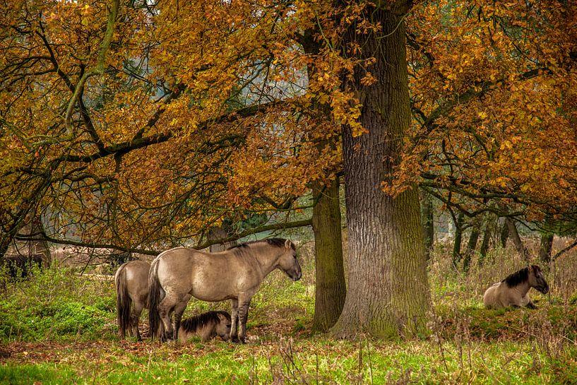 Herfstkleuren in Natuurgebied Ingendael van John Kreukniet