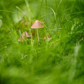Herbstliche Pilze von Rob van der Teen