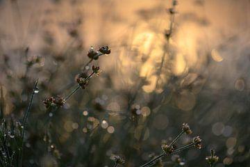 goud op de heide van Tania Perneel