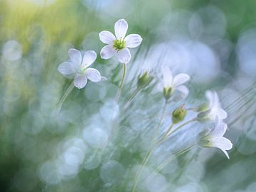 Floral joy sur Christl Deckx