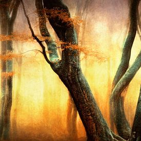 De Dansende Bomen van Lars van de Goor