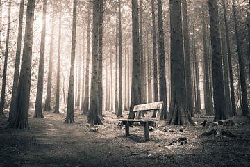 Bank im Wald von Niels Barto