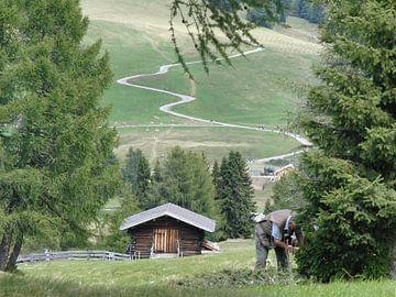 Bergen von Coen de Haan