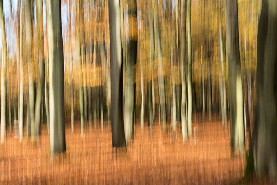 Abstract herfstbos van Felix Sedney