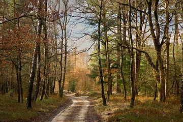 Veluwezoom Gelderland Stolz von Sran Vld Fotografie