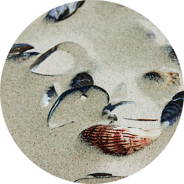 shells in the sand van Meleah Fotografie