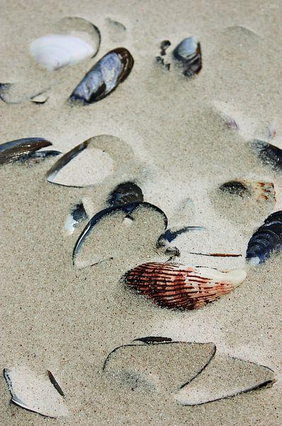 Muscheln im Sand von Meleah Fotografie
