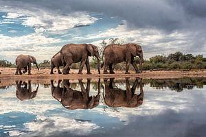 Olifanten gespiegeld in het water op een bewolkte dag