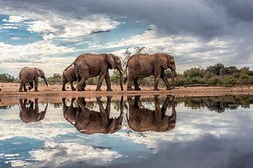 Olifanten gespiegeld in het water op een bewolkte dag van