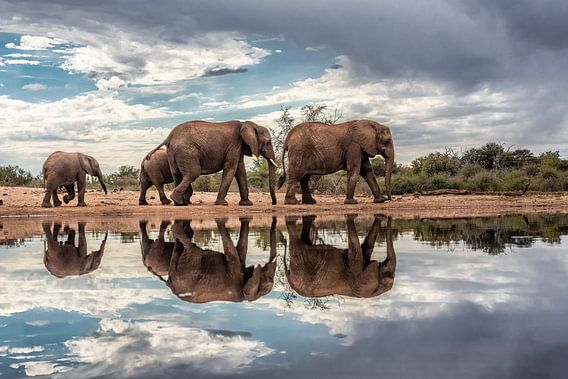 Olifanten gespiegeld in het water op een bewolkte dag van De Afrika Specialist