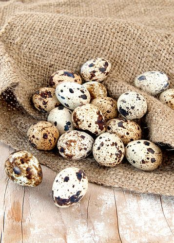 food2051a van Liesbeth Govers voor omdewest.com