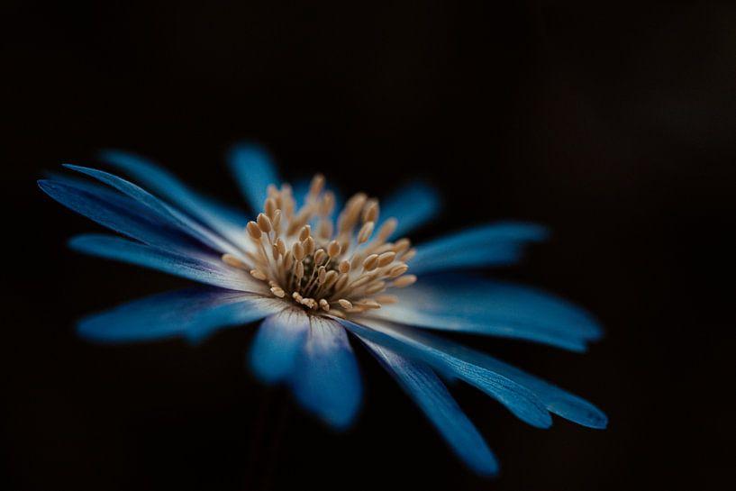 Blauwe bloem van Miranda Snoeijen