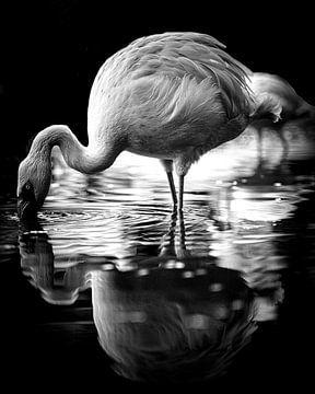 Flamingo van Wim van Beelen