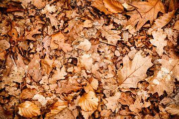 Herfstbladeren van Victor van Dijk