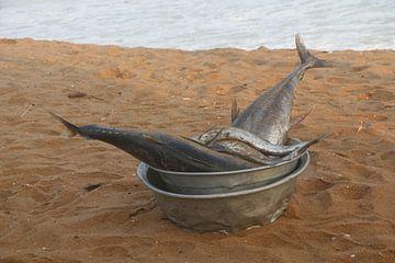 Vissen in schaal van