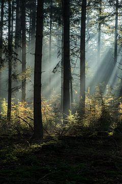Lichtshow im Wald von Eelke Brandsma
