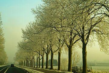 Straßenbelag mit Bäumen im Morgenschnee von wil spijker