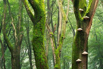Buche mit Moos und Unterholz von Rick Kloekke