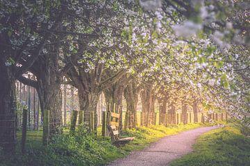 Blossoming vault (Bunnik / Utrecht) sur Alessia Peviani