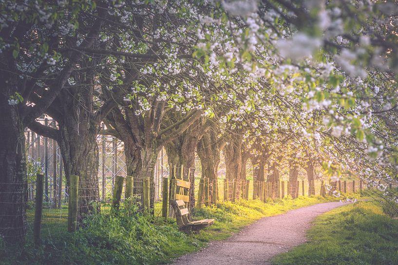 Blossoming vault (Bunnik / Utrecht) van Alessia Peviani