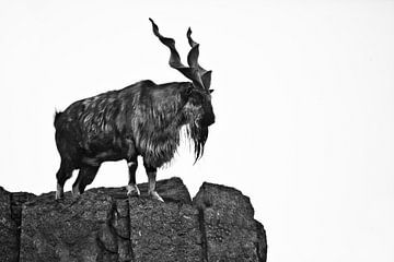 Geit Markhor staat op de berg, een dier met enorme vertakkende hoorns. van Michael Semenov