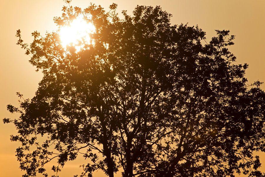 zonsopkomst van Ronald Jansen
