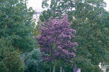 Prag - Violetter Baum von Wout van den Berg