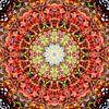 Round Robin van Frans Blok thumbnail