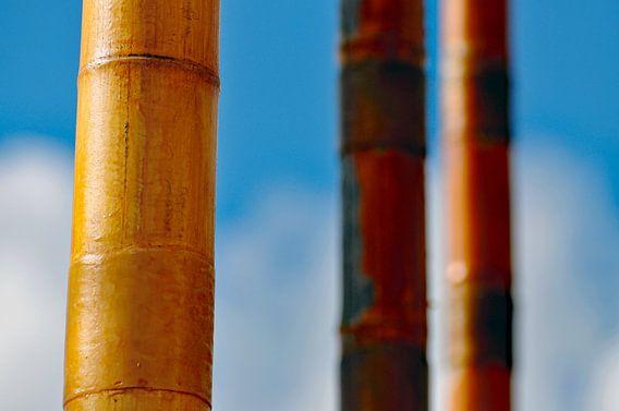 Bamboe van Jonathan van den Broeke