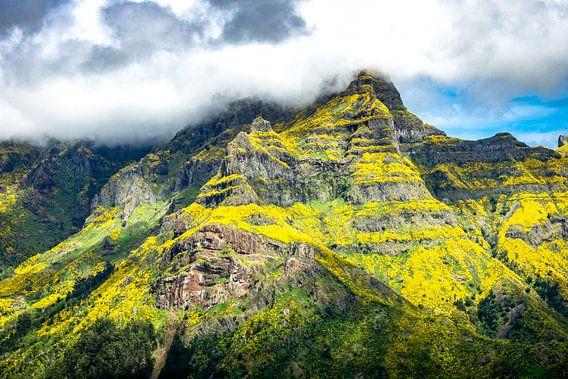Bloemen in de bergen op Madeira van Michel van Kooten