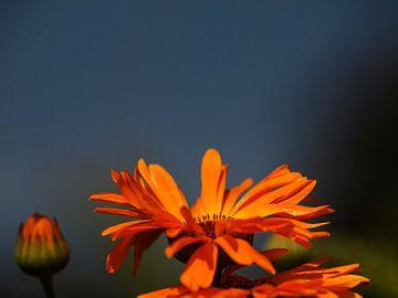 Beautiful Flower von Harald Dona