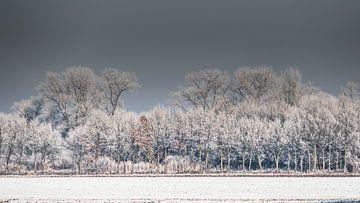 arbres en hiver sur t.a.m. postma