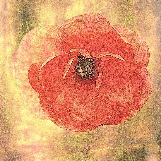 klaproos in rood (bewerkt) van Yvonne Blokland