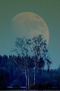 Concept landscape : Moon behind a tree von Michael Nägele